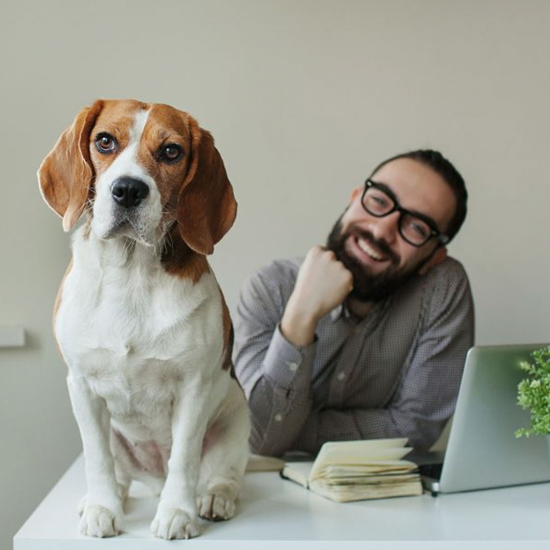 "Oficinas ""pet friendly"" una tendencia en crecimiennto"